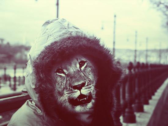 Animal_photo_manipulation_digital_art_lion_2