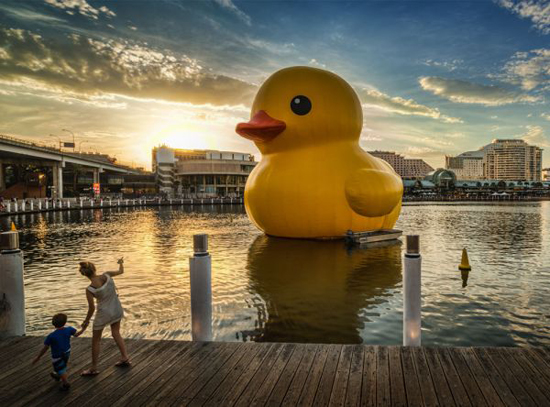 Art project Rubber Duck in Sydney, 2013