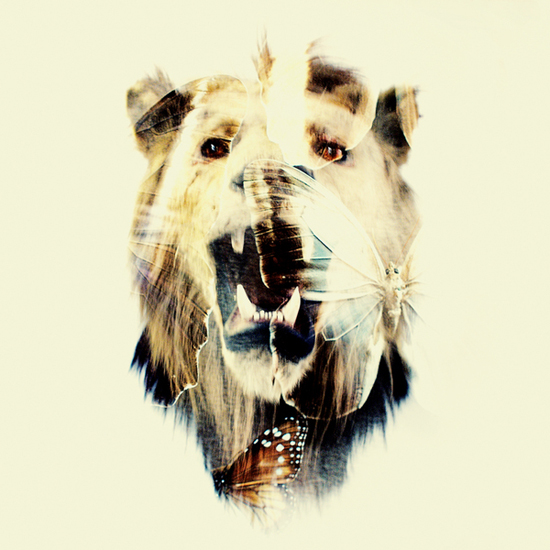 Photographer_Artist_Dan Mountford_Double Exposure_portraits_lion_moths