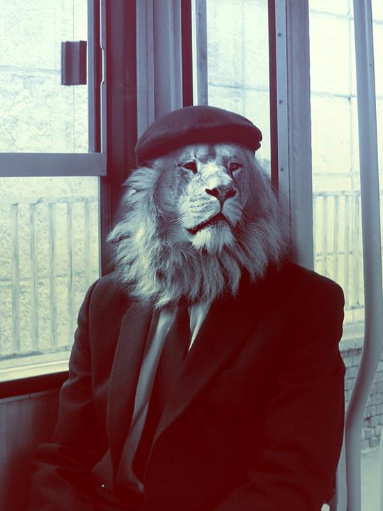 Animal_photo_manipulation_digital_art_lion