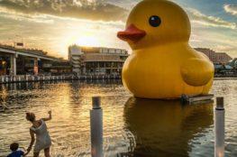 Rubber Duck in Sydney, 2013